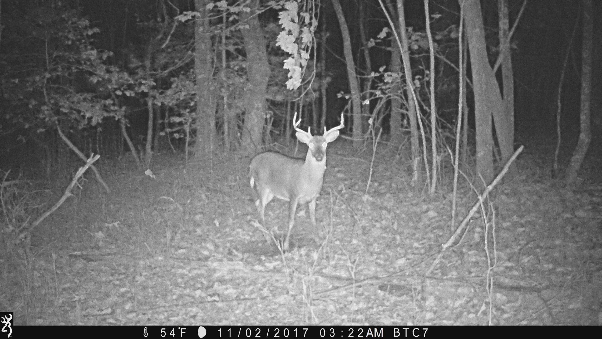 trail camera photos buck in scrape