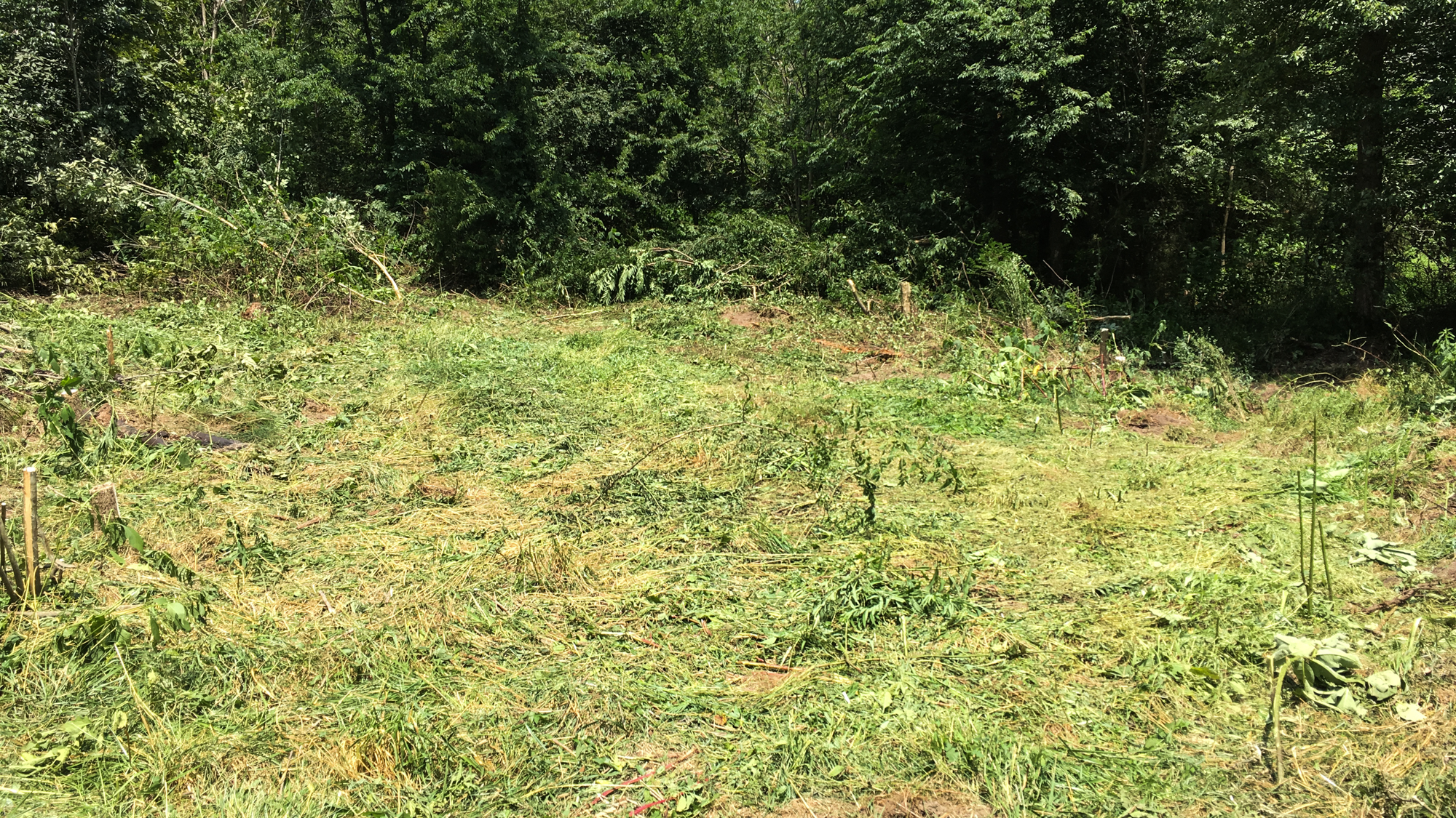 A new food plot opening