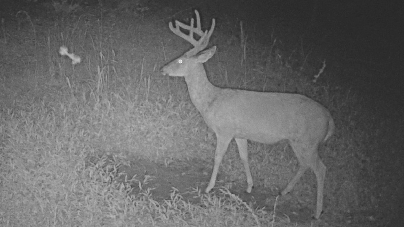Hunt The Land Velvet Buck