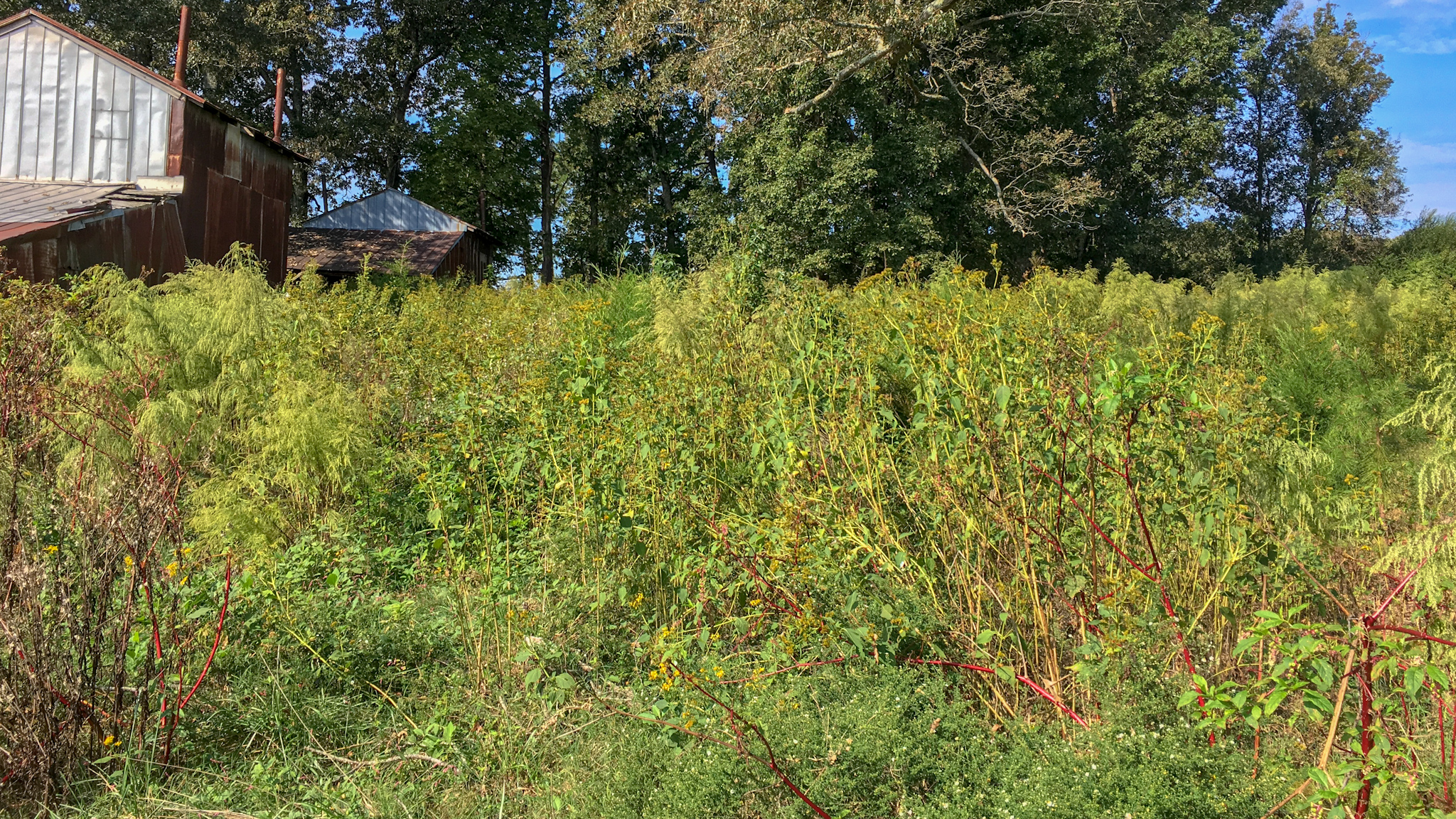 fescue control for deer