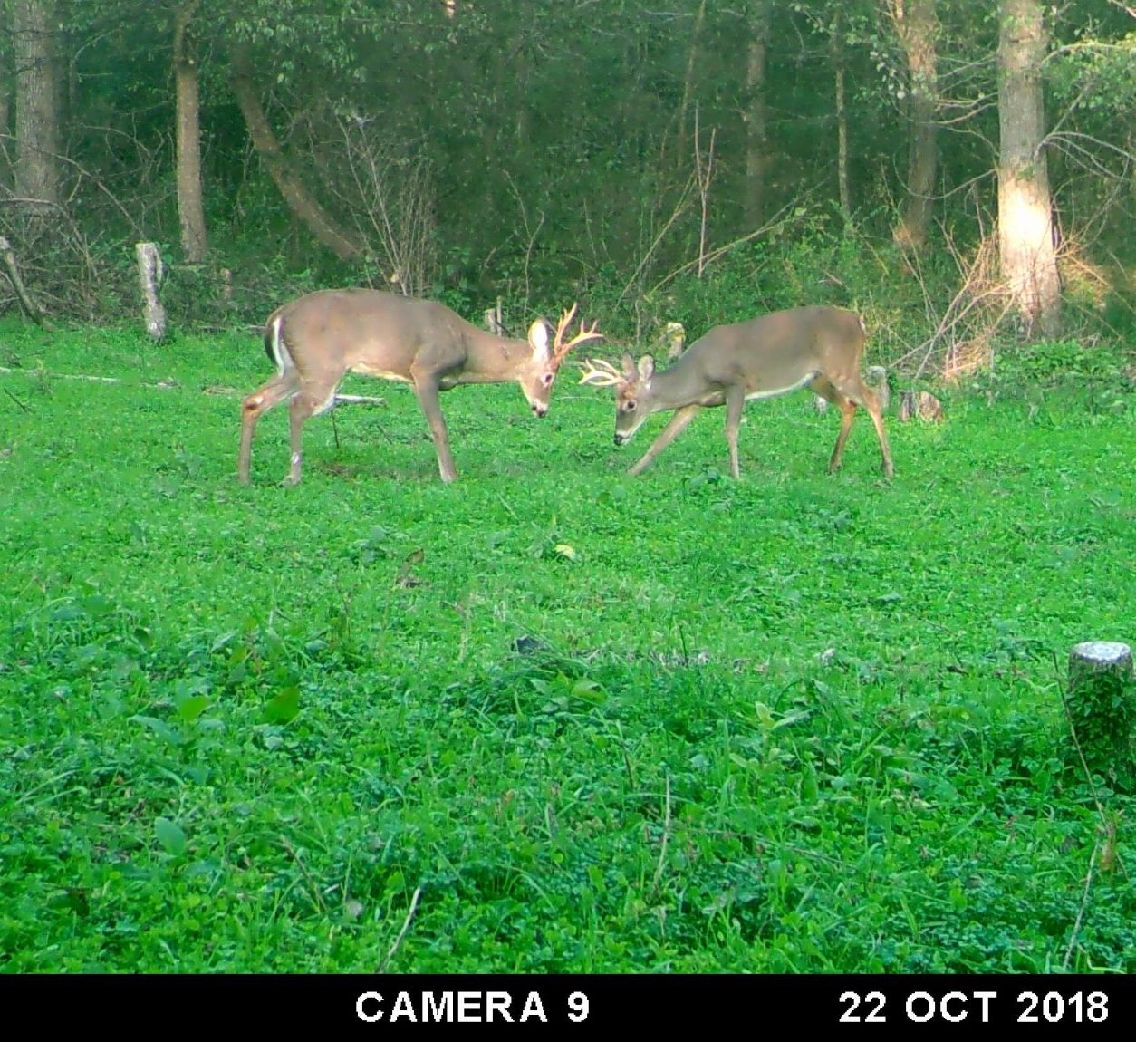 Hunting small food plots